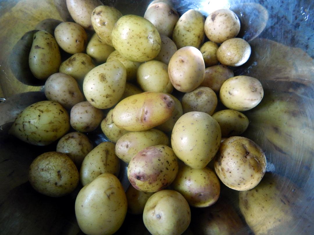 herb and spice new potatoes